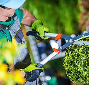 entretien Ricol pépinière, Macon, entretien espaces verts