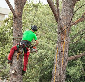 élagage et abattage Ricol pépinière, Macon, entretien espaces verts